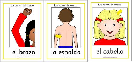 body-parts-spanish