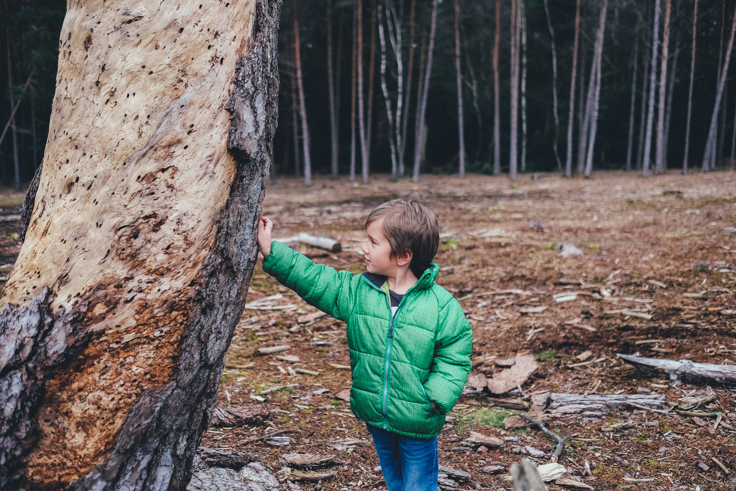 Parents should discuss the issue of eco-anxiety with children in an age-appropriate way.