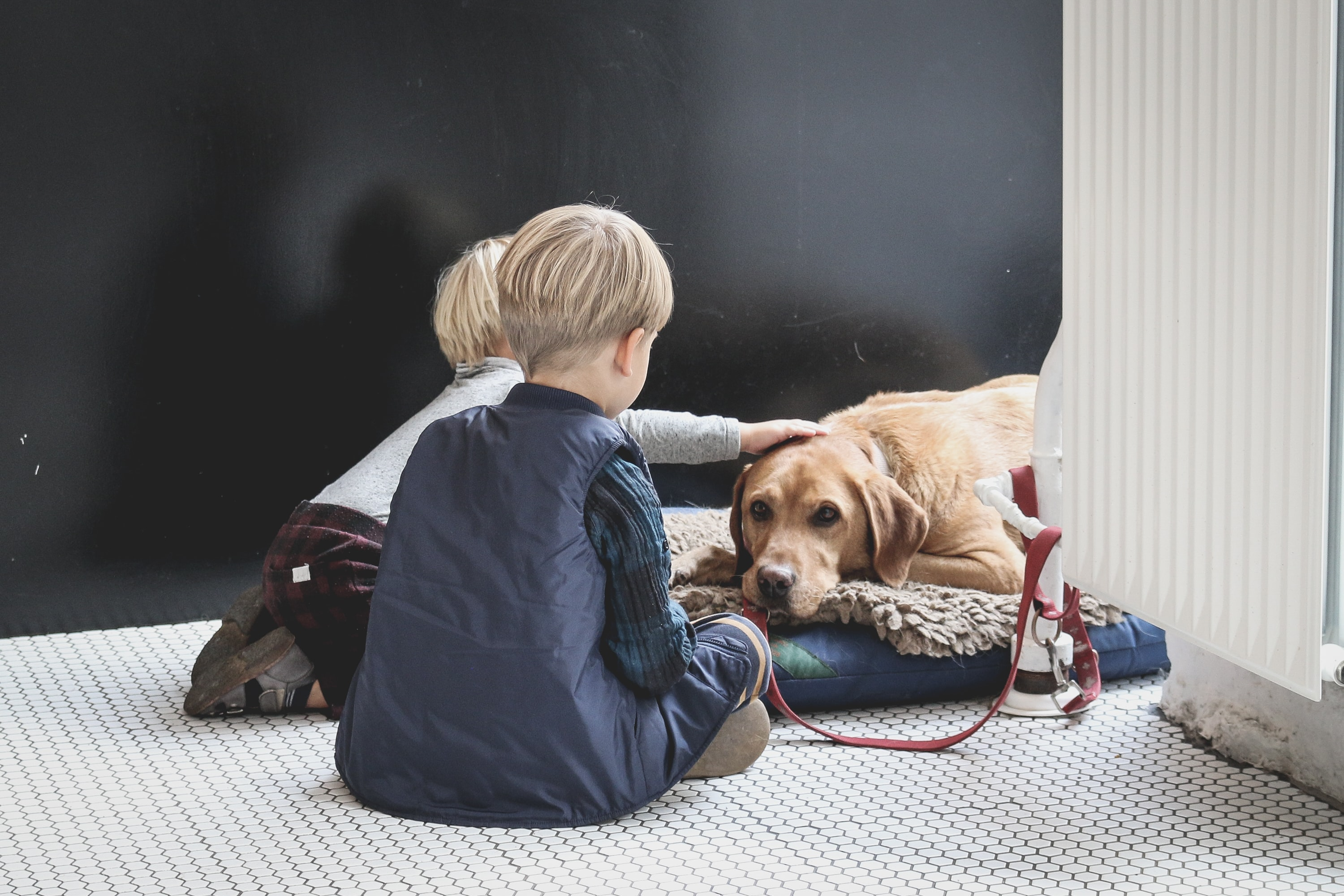 children with dogs also have lower levels of anxiety and cope a lot better with stress than those that grew up without one.