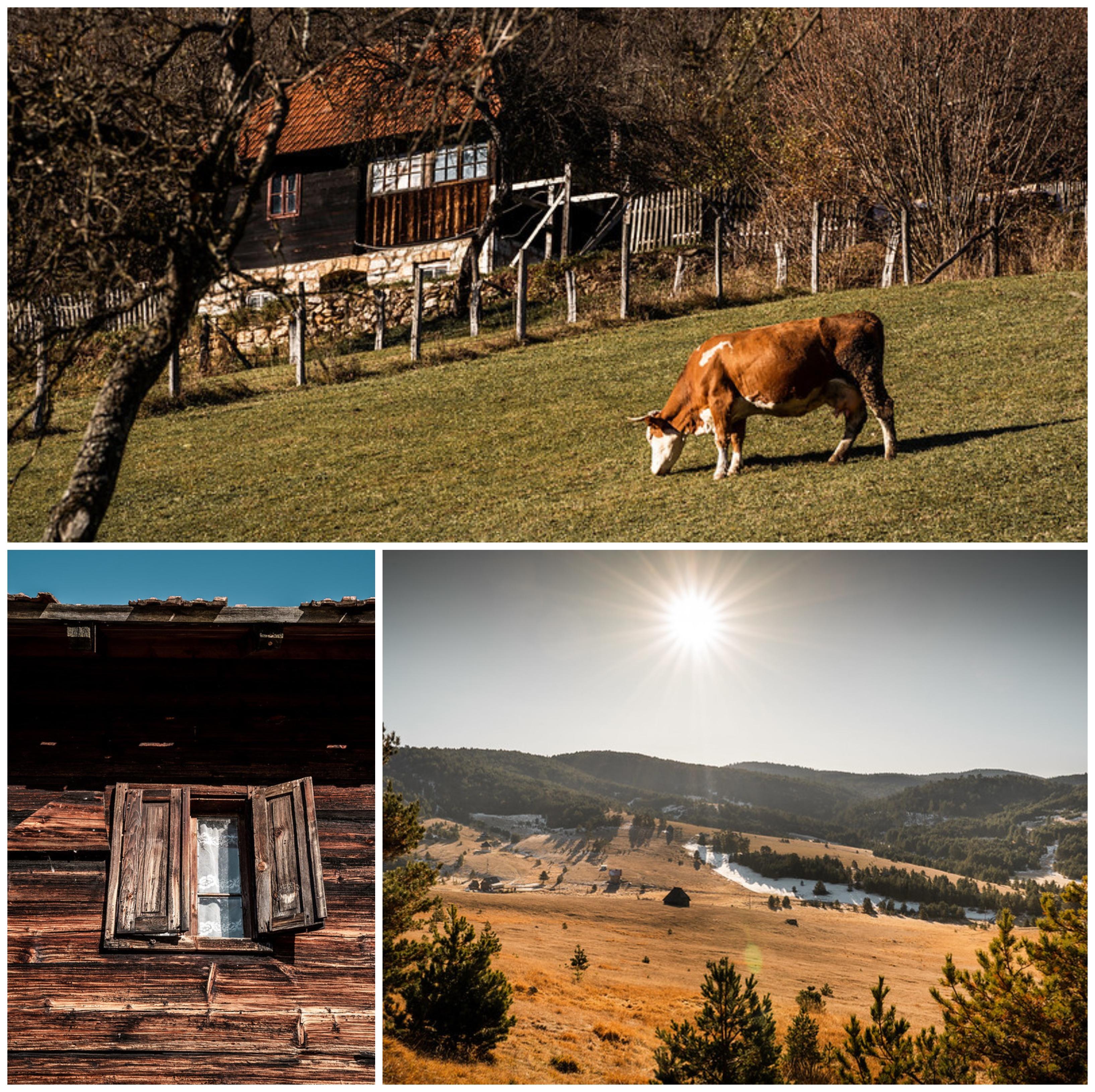 Selo Ljubiš, opština Čajetina.